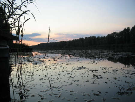 Evening is comming,the Swamp comes alive photo