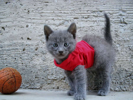 Dressed Kitten playing with ball photo