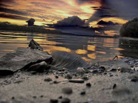 Shell on the river bank,sunset,abstract photo