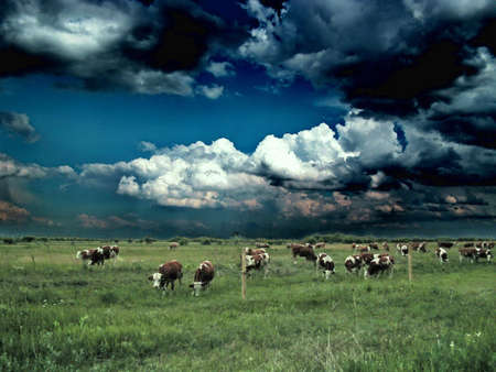 Cows grazing in a meadow with stormy sky background,abstract photo photo