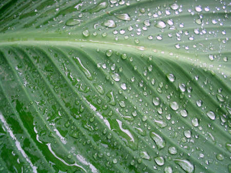 Macro photography,drops on the big green leaf Stock Photo - 2245436