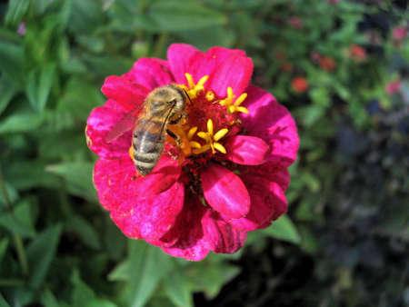 accumulation: bee on flower