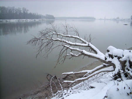 frozen fall tree covered with snow on river bank Stock Photo - 2301727