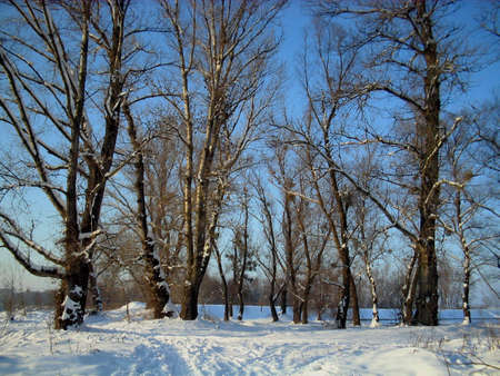 Winter  trees on clear blue sky background Stock Photo - 2330795