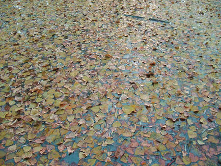 AUTUMN LEAVES OVER WATER photo