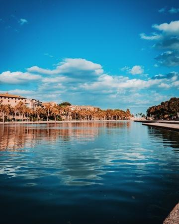 Palme de Mallorca near the harbor 版權商用圖片