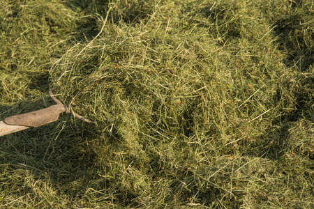 knave: Forks carrying lot of hay Stock Photo