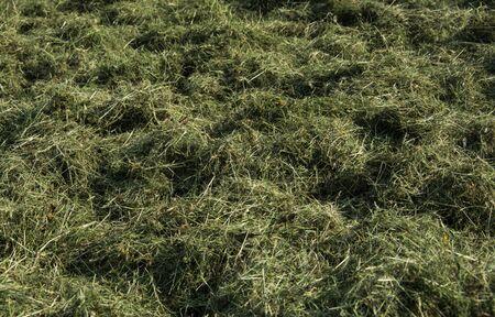 hay: Onlny hay Stock Photo
