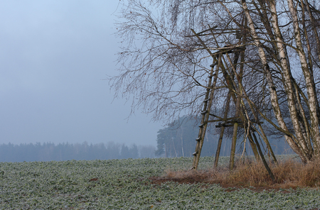 hoar: Field with beet in december morning with hoar frost with hunting briony and white birch Stock Photo