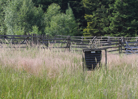 calamity: Pheromone  trap for bark beetle in grass on  meadow near forest . Stock Photo