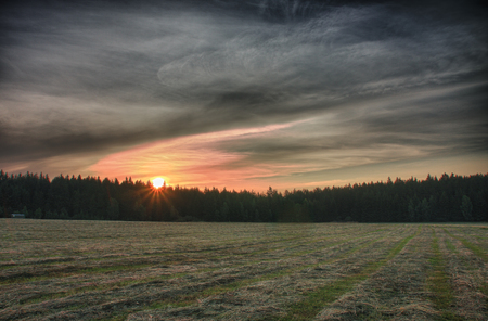 cut the grass: Sunrise time in summer morning , meadow with cut grass, forest and colour sky, hdr photo.