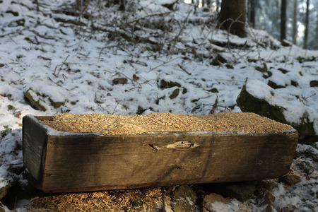 trough: Wooden trough full of grain  for wild animals  in snowy forest.