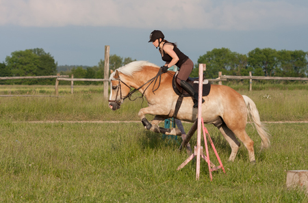 A young woman jumping over hurdle on a horse, horse breed Haflinger. Stock Photo
