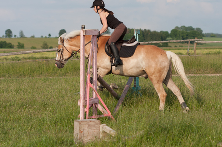 A young woman jumping over the hurdle on a horse, horse breed Haflinger. Stock Photo