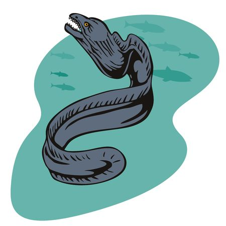 eel: Moray eel