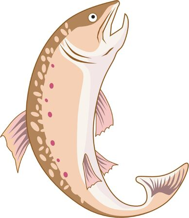 Trout on white background Stock Vector - 1372829