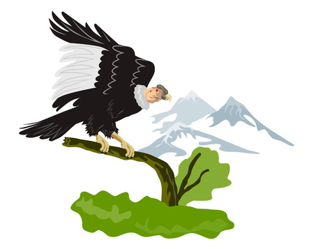 buzzard: Condor perching on branch with mountains Illustration