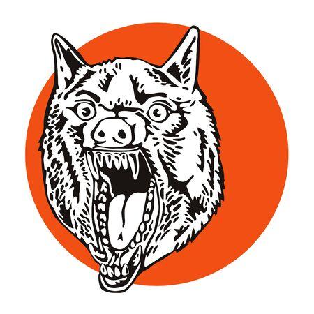 gray wolf: Growling gray wolf