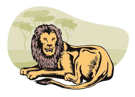 royal safari: Lion in safari Illustration