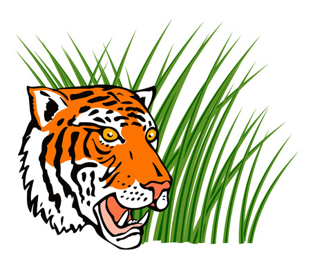 prowling: Tiger on the prowl