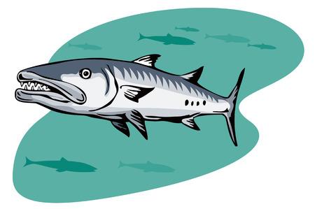 barracuda: Barracuda  Illustration