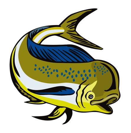 dorado: Dorado dolphin fish