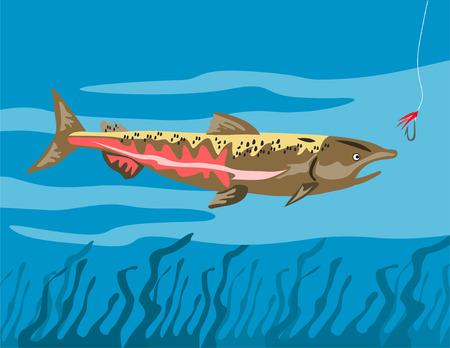chinook: Chinook salmon eyeing the bait Illustration