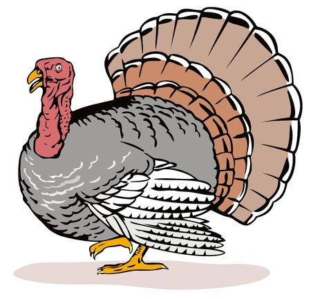 Wild turkey Vector