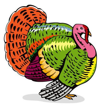 Wild turkey sideview Vector