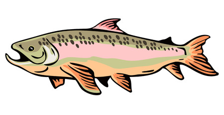 Brown trout Stock Vector - 1985700