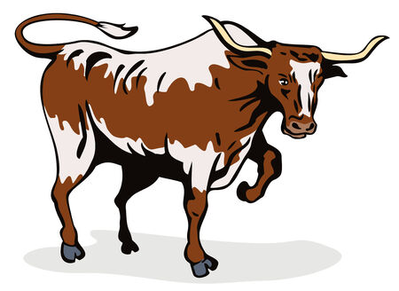 Texas longhorn bull about to attack Vector