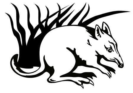marsupial: Bandicoot
