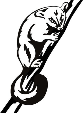 wildlife: Possum Illustration