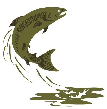 vector fish: Atlantic salmon leaping