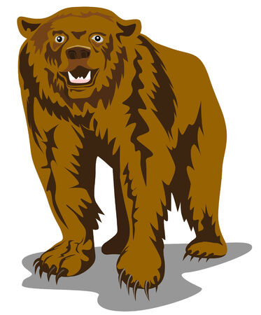 brown bear: Brown bear Illustration