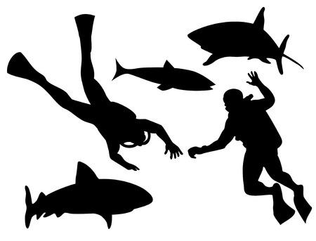 great white shark: Scuba diver and shark