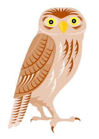 ornithology: Little owl