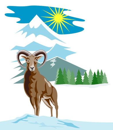 mouflon: Wild ovejas monta�as con nieve