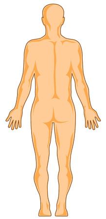 Human anatomy rear Stock Vector - 2732692