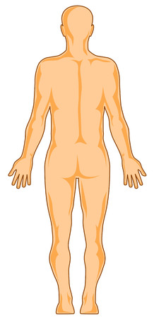 Human anatomy rear
