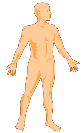 Human anatomy Illustration