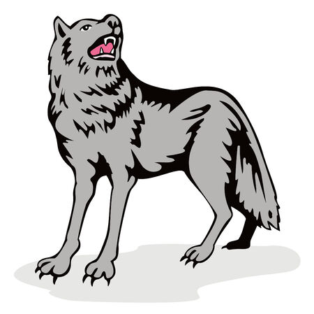 gray wolf: Wolf howling