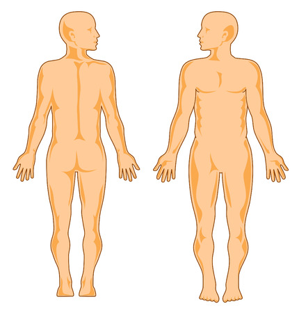 Human anatomy, front and rear Stock Vector - 2853792