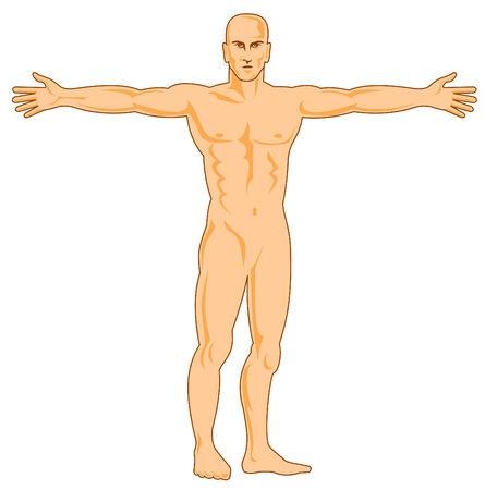 legs spread: Figura humana con los brazos extendido