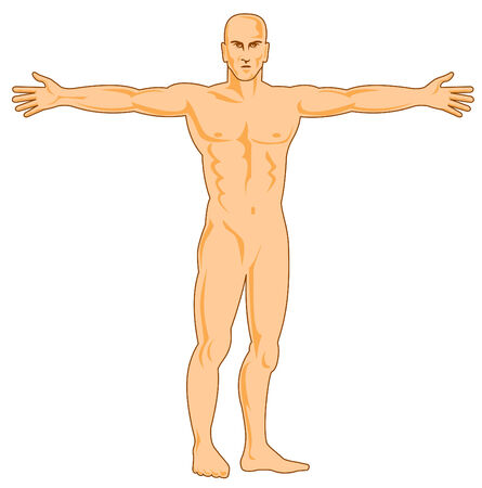 arm muscles: Human figure with arms spread
