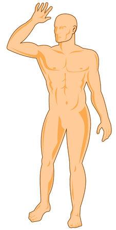 arm muskeln: Menschliche Figur