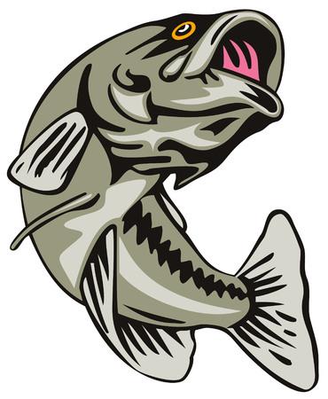 Largemouth bass Vector