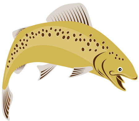 salmon leaping: Spotted brown trout