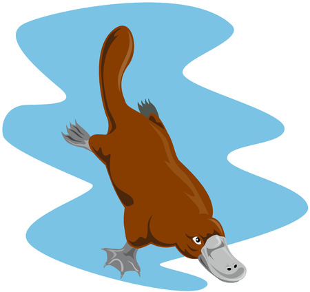echidna: Platypus