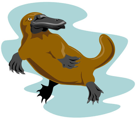 platypus: Platypus